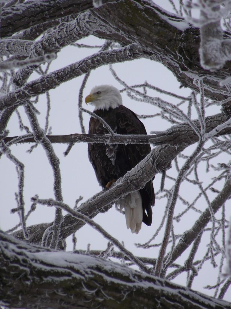 (Foto: Great River Road Illinois)