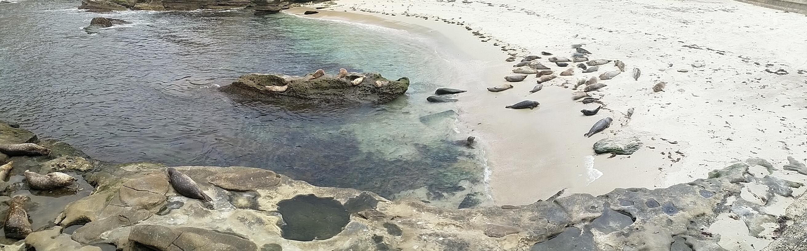 Blick von der Strandmauer auf den Strand in der Bucht Children's Pool mit Seerobben